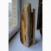 Окаменелое дерево (Кайнозой, Неоген, Миоцен) - 10-12 млн. лет