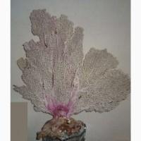 Уникальный коралл