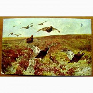 Редкая открытка «Шотландские граусы».1900 год