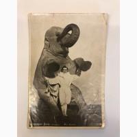 Почтовая открытка В.Дуров со слоном