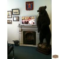 Чучело медведя в полный рост