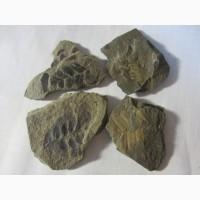 Окаменелая флора Палеозоя
