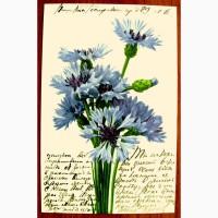 Редкая открытка.Васильки.1908 год