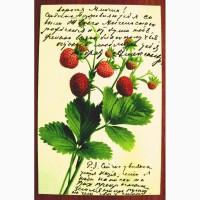 Редкая открытка.Земляника.1906 год