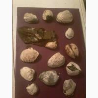Продам коллекцию окаменелостей 80 предметов