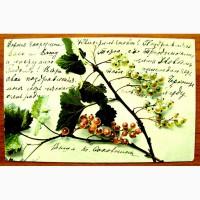 Редкая открытка.Смородина.1904 год