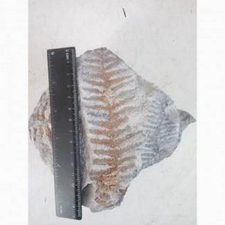 Продам окаменнелый папоротник, найден на глубине 120м
