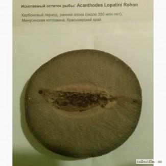Продам ископаемый остаток окаменелой рыбы