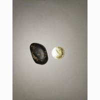 Meteorite Achondrite Rare 陨石