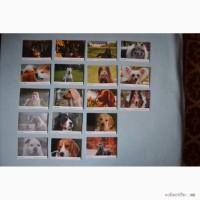 Продаю календарики из серии Кошки и из серии Собаки, по 18 штук в каждой серии