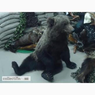 Как сделать чучело медведя своими руками 28