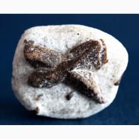Ставролит, двойниковый кристалл в слюдистом сланце 4