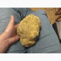 Продам каменную черепаху