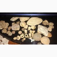 Продам маленькую коллекцию окаменелостей