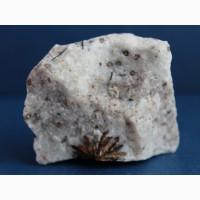 Астрофиллит на полевом шпате