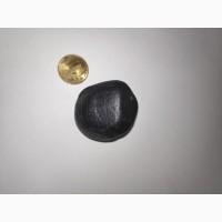 Martian Meteorite Carapace
