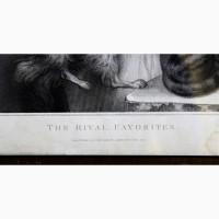 Продается Гравюра The Rival Favorites Anthony Cardon. Англия 1804 год