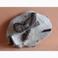 Ставролит, двойниковый и одиночные кристаллы в слюдистом сланце