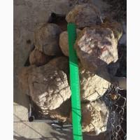 Минералы агаты в форме ядер, 30 камней