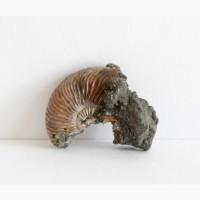 Часть раковины аммонита с кристаллами пирита